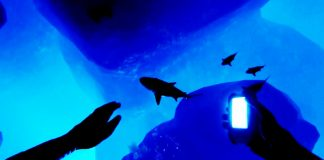 Iron Fish - İnceleme 2