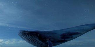 Sosyal Medya Oyunu Mavi Balina Öldürmeye Devam Ediyor 2